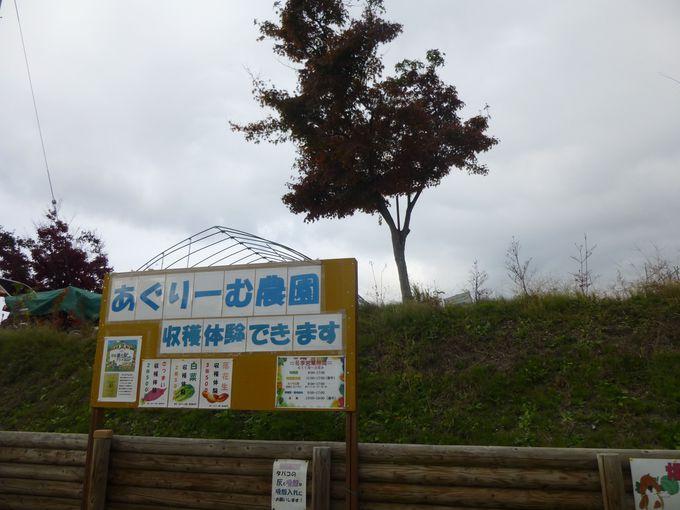 五位:農業体験に通いたい「道の駅あぐりーむ昭和」