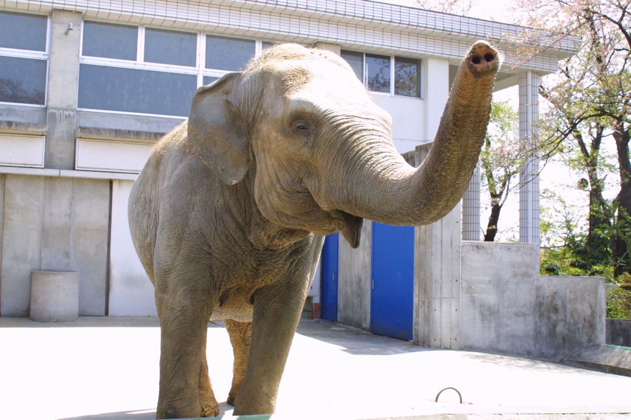 ゾウやキリン、小動物とのふれあいコーナーも!「桐生が岡動物園」