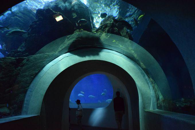 トンネルをくぐって「うみたまホール」へ。建物の構造美も見どころ
