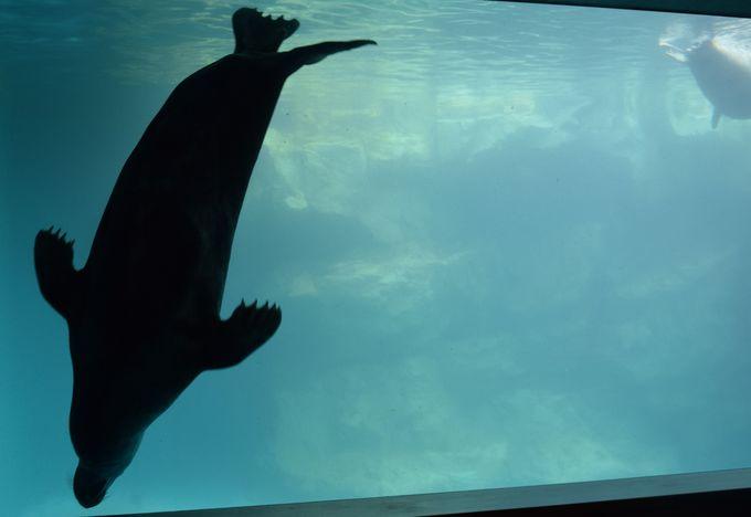 優美に泳ぐ海獣たちのシルエットに癒される