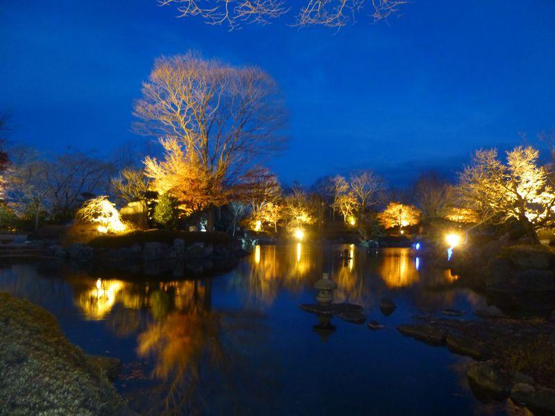 鮮やかに美しい、日本庭園のライトアップ