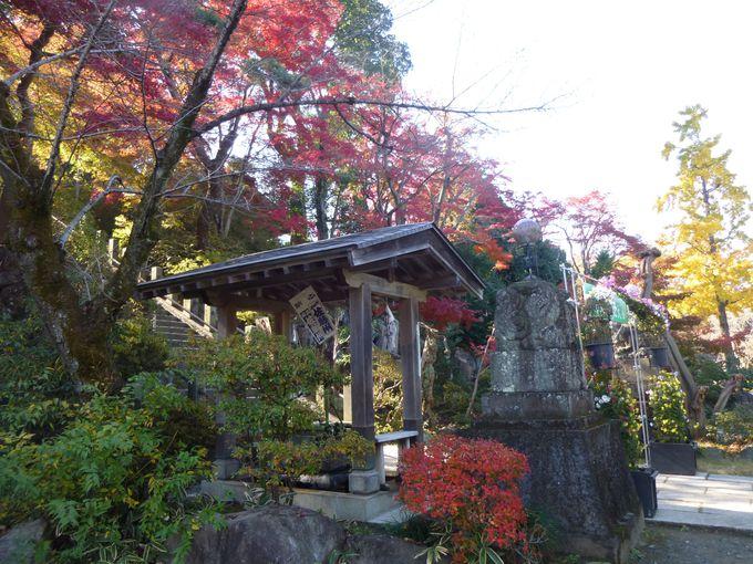 高崎の紅葉の名所・少林山達磨寺