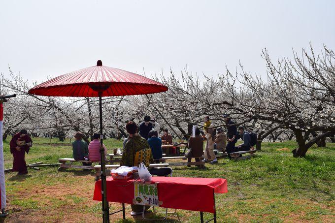 善地会場では、「梅見茶会」「春のもちつき大会」も