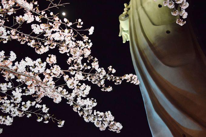 見頃は3月下旬〜4月上旬。開花状況をチェックして出かけよう