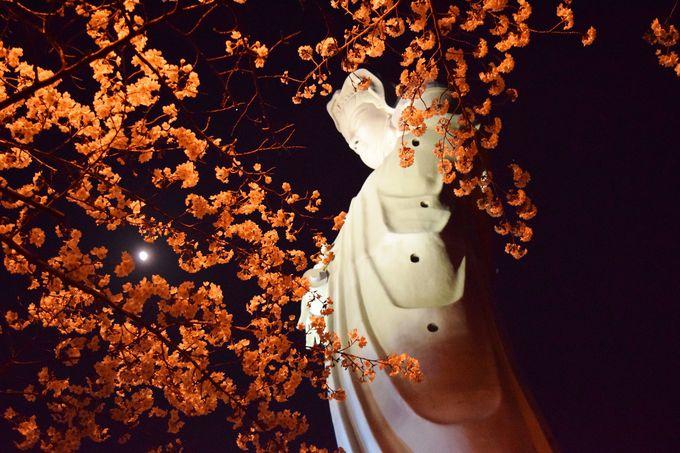 観音様と夜桜の競演は、ことのほか美しい