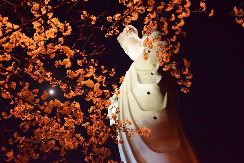 春の夜は観音山へ。高崎白衣大観音・夜桜拝観&ライトアップ