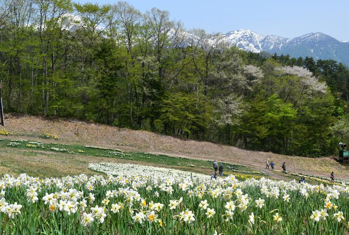 山々と花の競演も美しい