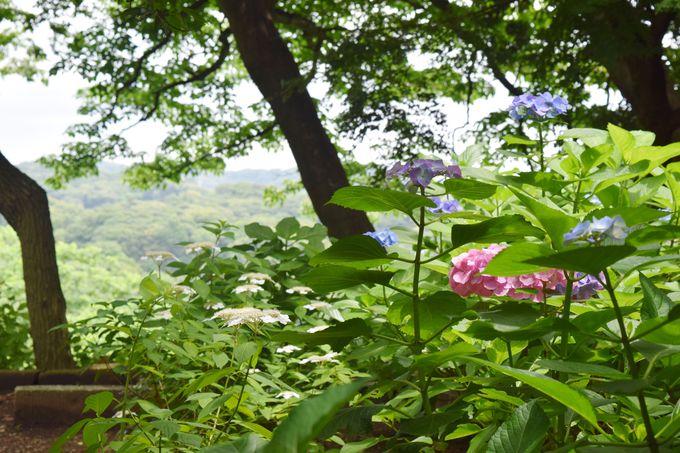 源氏山公園を散策