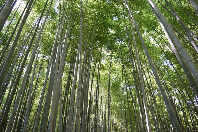 清々しい竹林を歩く