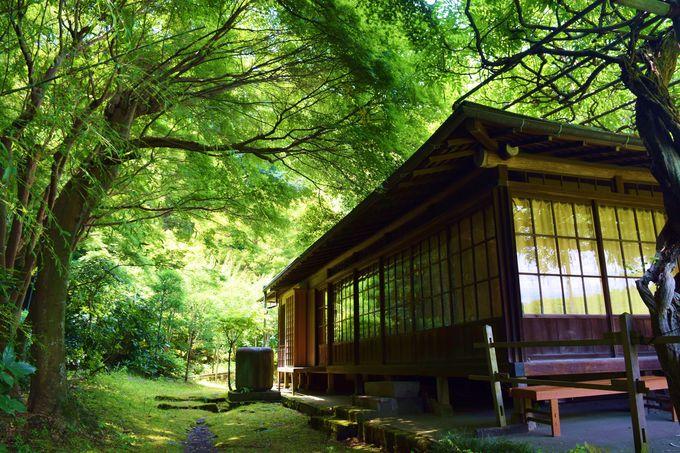 美しい緑の世界が広がる書院