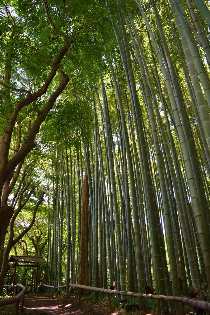 静かな竹林を散策