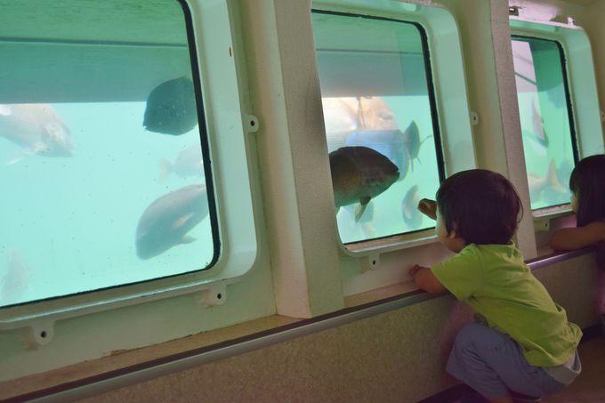 もっと海を知ろう「オーシャンラボ」