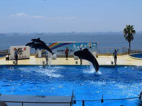 博多湾をバックにイルカがジャンプ!福岡「マリンワールド海の中道」は見どころだらけの水族館