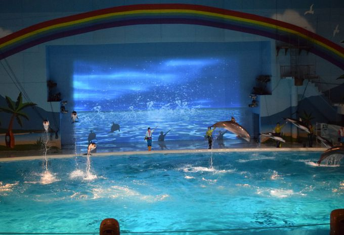 必見!海の生きものと光・音・映像がコラボ「海の動物たちのショー〜MOONLIGHT SHOW〜」