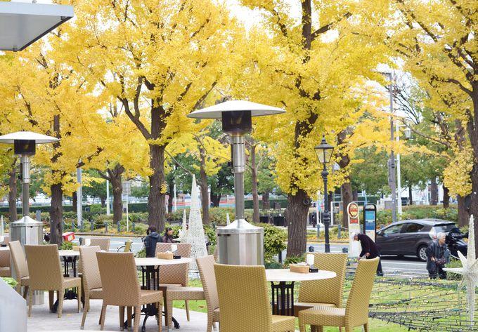 銀杏並木の見えるカフェも。ゆったり休みながら過ごそう