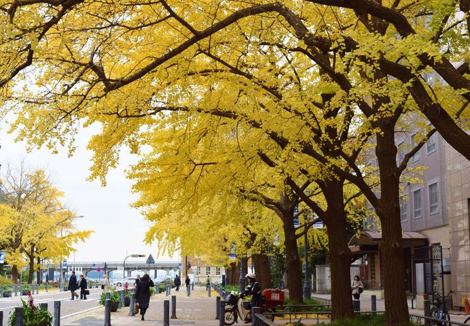 続いて、日本大通りを散策