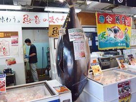 三崎まぐろも観光船も!三浦の特産物が並ぶ「うらりマルシェ」の楽しみ方