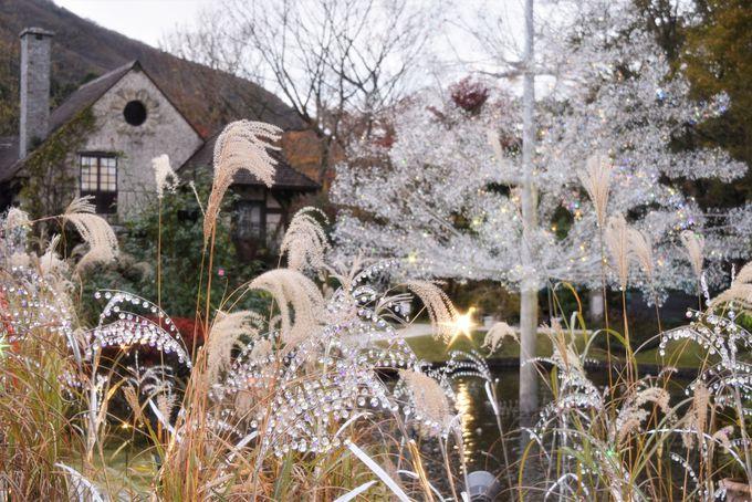ガラスのツリーやススキ草原、箱根の紅葉も一緒に楽しめる