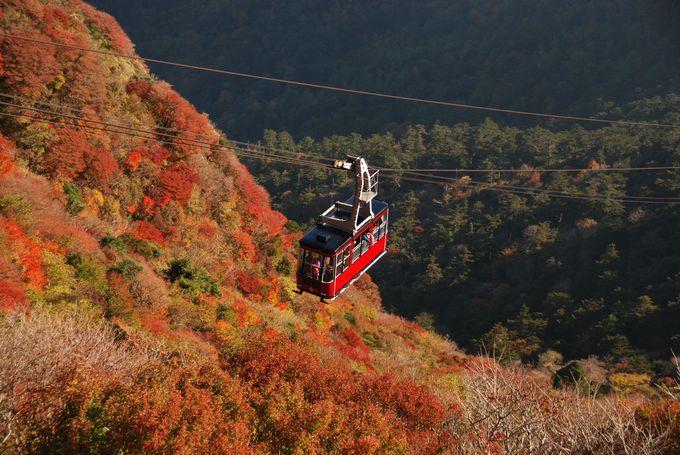 季節の見どころは、紅葉や霧氷