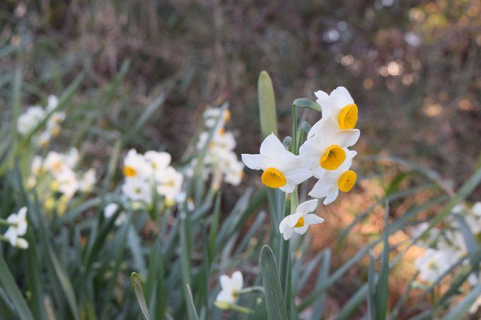 散策途中に楽しめる景色は、四季折々の花やおもしろオブジェ?