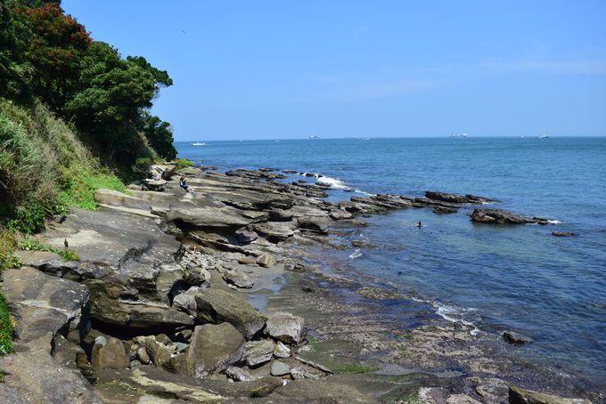 磯遊びやバーベキューも。海を感じられる観音埼灯台周辺