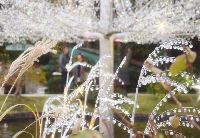 「ラ・コッピア」青空に輝くクリスタルガラスのツリー