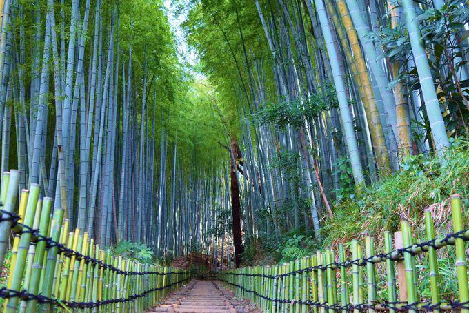 「ひよどり坂」でフォトジェニックな竹林に癒されよう