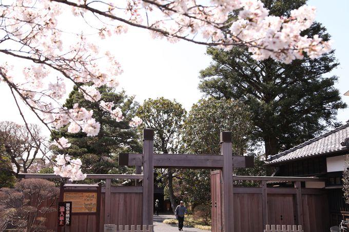 佐倉藩主の邸宅「旧堀田邸」へ〜最後にお土産を購入して一日観光終了