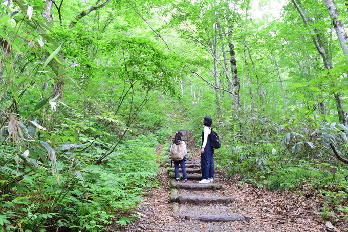 世界遺産の森「白神山地」で豊かな自然に触れる