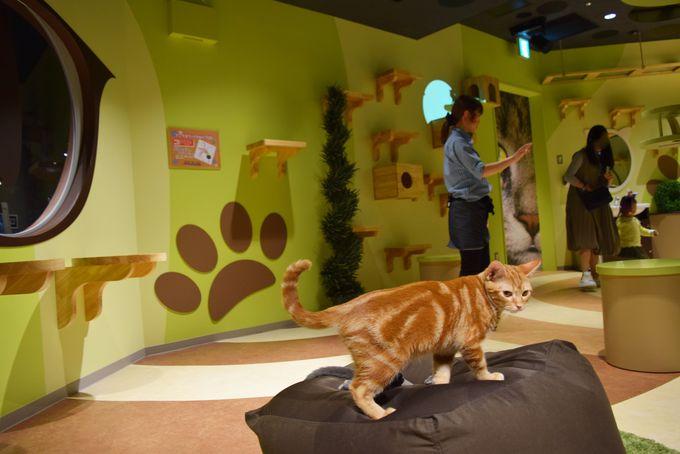 午後は屋内施設へ!「オービィ横浜」で新感覚ネイチャー体験