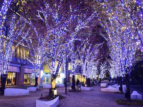 イルミネーション「ヨコハマミライト」みなとみらいから横浜駅へ続く光の道