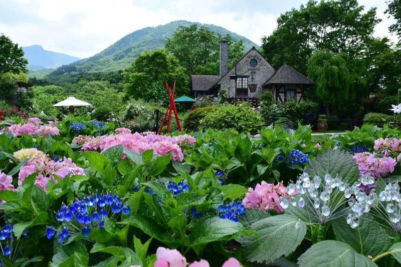 ガラスのあじさいとバラが輝く「箱根ガラスの森美術館」の初夏