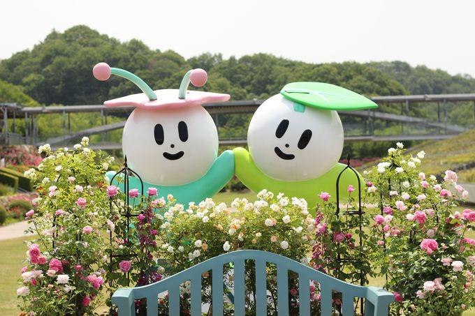 車でのアクセスが便利!花フェスタ記念公園