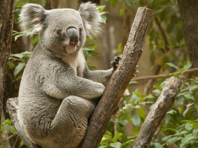 可愛いコアラと国内最大級アジアゾウ舎が人気の「東山動植物園」
