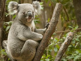見どころ満載!名古屋「東山動植物園」は一日中楽しめる!