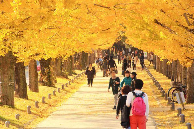 岐阜県の紅葉の穴場「冬ソナストリート」