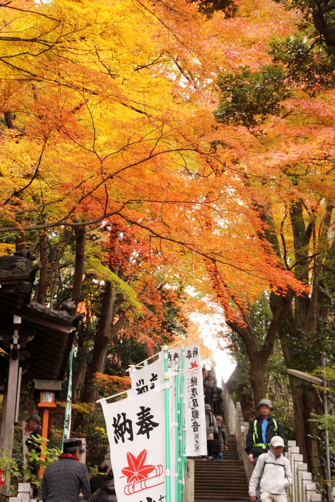 秋は混雑するため、アクセスは公共交通機関が便利!