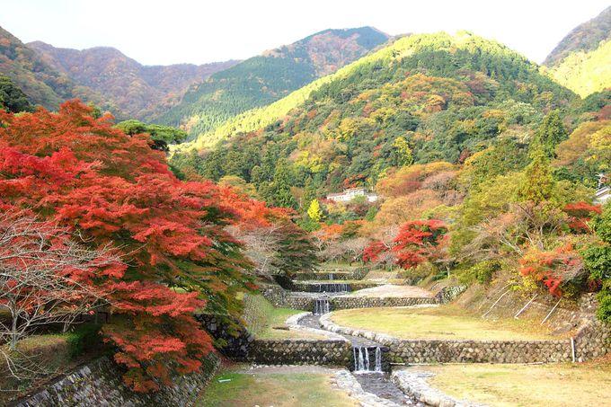 紅葉の見頃は、11月中旬〜12月上旬