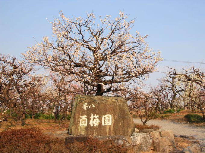 季節の花を楽しもう!岐阜県の梅・桜・バラの人気名所