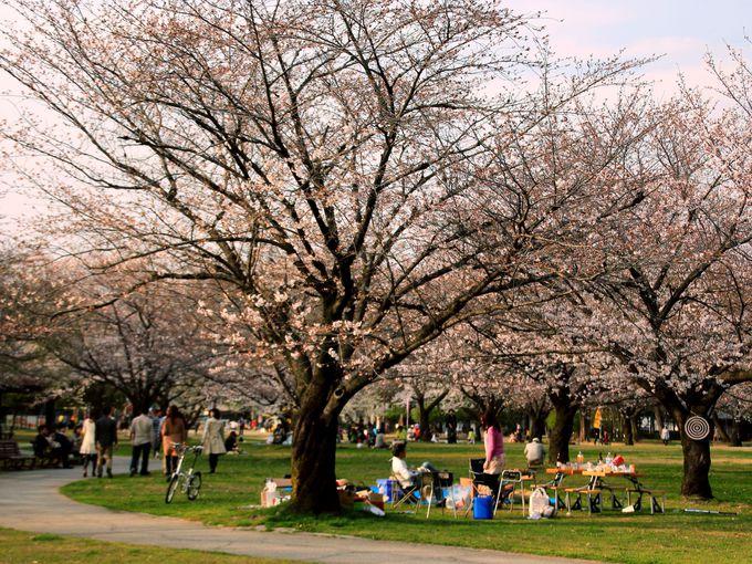 各務原市民公園の桜もおすすめ!