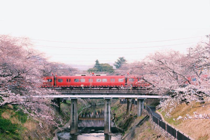 1200本の桜が両岸に並ぶ!岐阜県各務原市「新境川堤の桜」