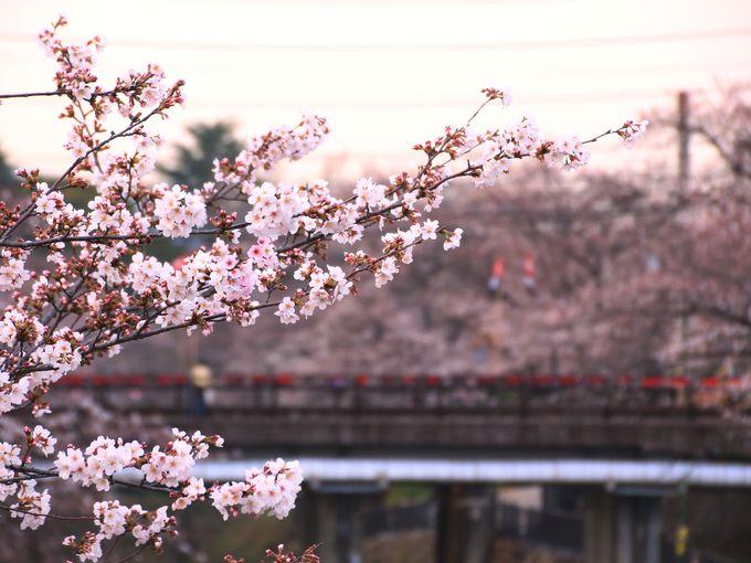 桜の時期は混雑!人気の桜スポット
