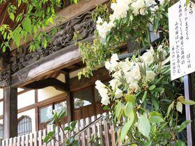 びっくり仰天!東京・国分寺は摩訶不思議、びびびなスポットだった?!
