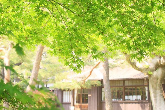 知られざる国分寺の名勝、秘境?!造形美の殿ヶ谷戸庭園!