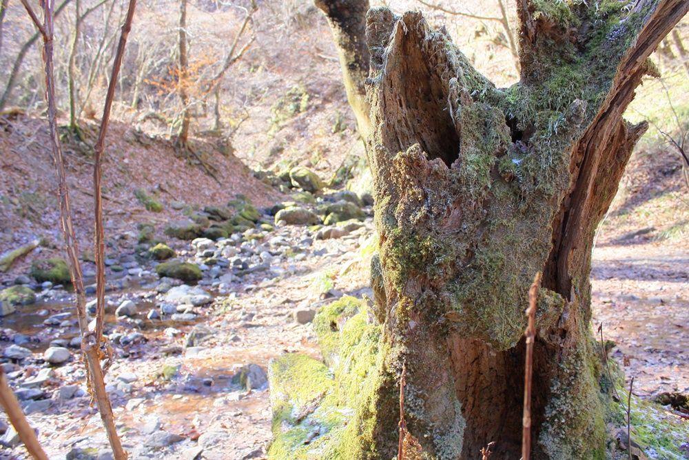 深緑に現る岩石園!御岳山のオススメスポット「ロックガーデン」