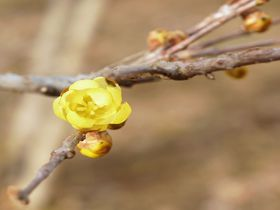 とびっきり可憐な花を見つける旅!調布・神代植物公園へ行ってみよう