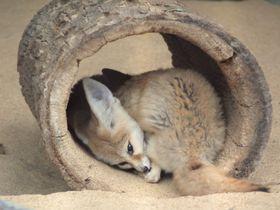 「井の頭自然文化園」東京観光の合間に動物たちとダラダラリラックス!