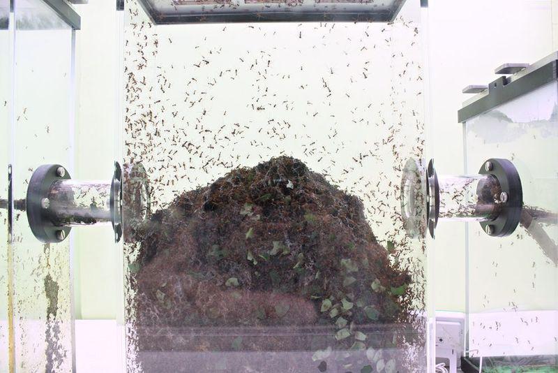 「キモ」さ絶好調!!昆虫に支配された「多摩動物公園」の凄過ぎる実態とは