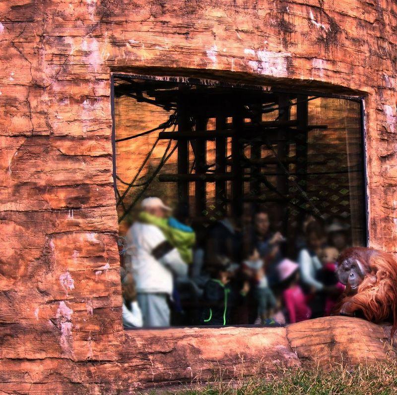 地球をぎゅっと凝縮!多摩動物公園で世界一周の旅