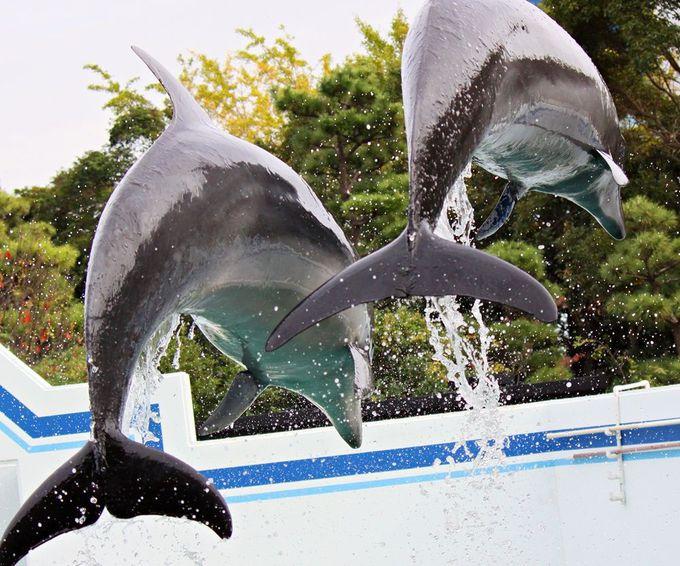 イルカじゃ〜んぷ、イルカきぃ〜く、イルカぱぁ〜んち!ダイナミックなショーを楽しむ